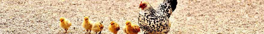 vemo_vsv_feed_hens_vemocorp